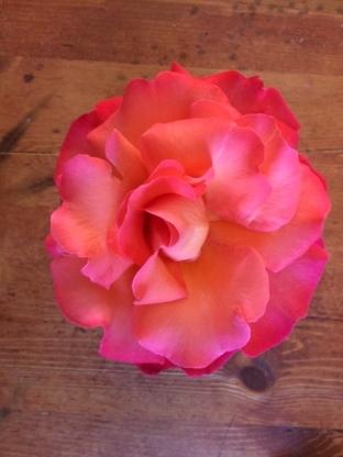 Anna's rose