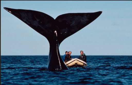payne and whale