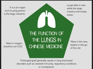 lungs in chinese medicine