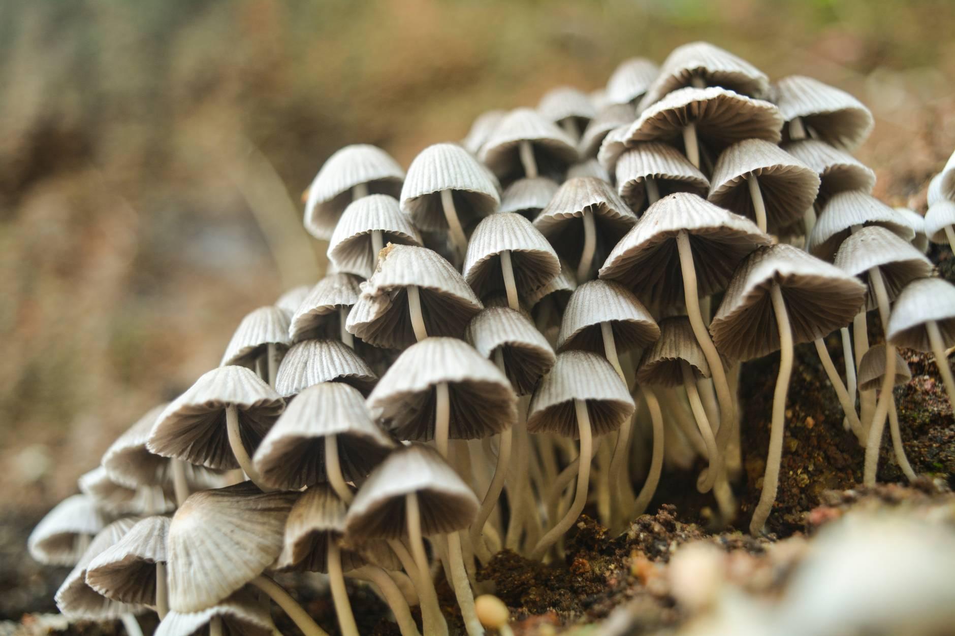 closeup photo of white mushrooms